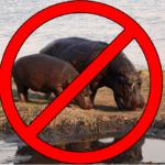 not-hippos